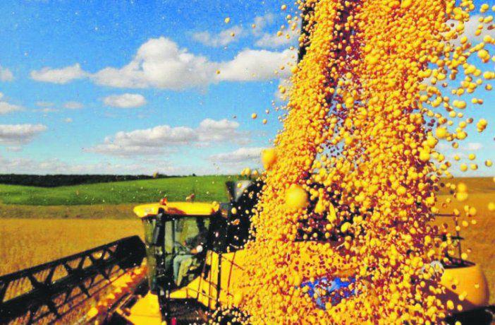 Alerta en el campo: China reduce al 30% las importaciones de soja